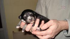 ma chienne Eikki à la naissance