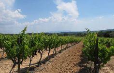 Cucuron vineyard #Pr