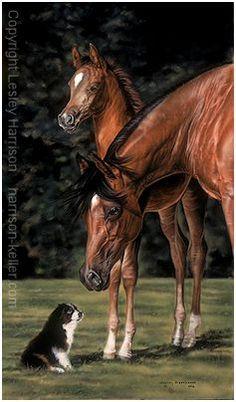 Lesley+Harrison+Art | HK Fine Art & Prints by Lesley Harrison - Horse Art Prints & Gifts