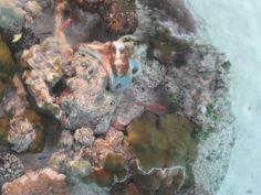 eee! Cute octopus! Bora Bora.