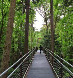 Suspension bridge. The Ravine Experience at Bellevue Botanical Gardens, WA.