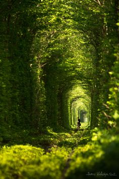 The Tunnel of Love is located in Kleven, Ukraine