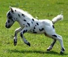 How to Learn About the Appaloosa Horse How to Learn About the Appaloosa Horse new foto