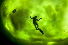 Diver swimming under the ice inside Arctic Circle is silhouetted by the glow of the northern lights above ~ c George Karbus/Solent News/Rex Features