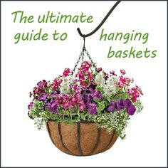 The Ultimate Guide to Hanging Baskets by Ambius - small design touches for the exterior of your home!