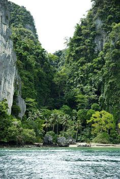 Jungle Life | Bungle in the Jungle Inspiration