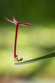 ant, flower