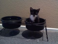 This kitten hasn't quite figured out what the dog bowl is actually for. Right now, it's a nice little bed!