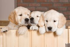 41 Things You Might Not Know About Dogs