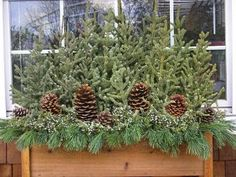 Love this for window boxes in the winter.