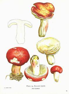 mushroom kitchen, book