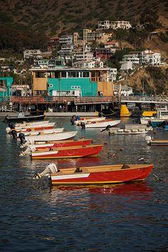 the Harbor of Avalon  Catalina Island, California