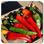 Organic NuMex Joe E. Parker Hot Pepper