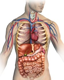 Medical Terminology and Body System quizzes for nurses.