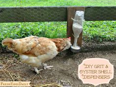 DIY Wine Bottle Chicken Grit & Oyster Shell Dispenser Tutorial