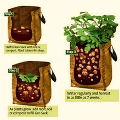 Growing Potatoes In Containers: a no-dig approach to growing root veg