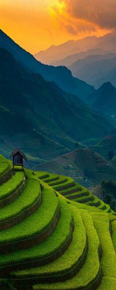 Sunset on the rice terraces of Mu Cang Chai, Vietnam • photo: Ratnakorn Piyasirisorost on 500px
