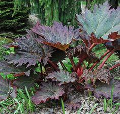 plant, shade