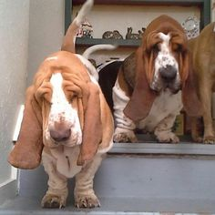 They got a double dose of the wrinkly gene.
