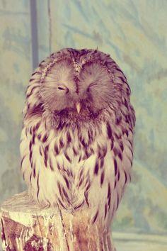 bird, anim, awwwwh, artphotographi, cuti, ador, beauti owl, hoot, owls