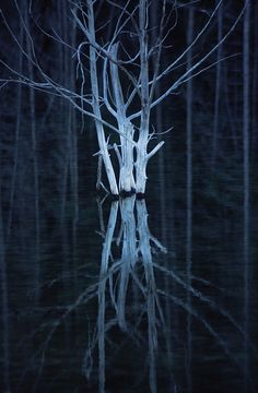 Reflections of a dead tree