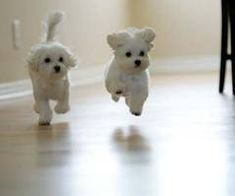 cuties!