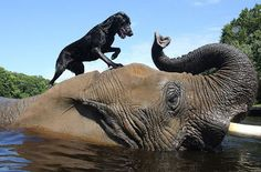 elefante-cachorro-amizade2
