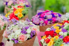 Colorful Roses & Flowers.
