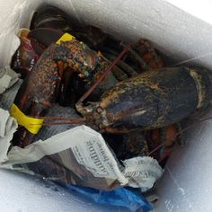 Friday Night dinner has arrived - A & A Lobsters