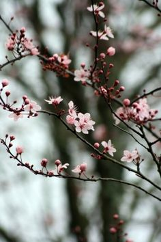 Is it time for #spring yet? Our fingers are crossed it appears sooner rather than later! #Trees #blossoms #TreePhotos