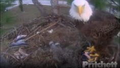 Popular SWFL Eagle Cam hit by lightening
