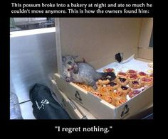 funny animals, animal pics, funny pics, cheat meal, picture quotes