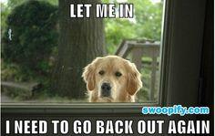 Please Let Me In #humor #lol #funny