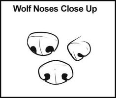 ... how to draw wolves how to draw anime noses wolf draw steps for drawing