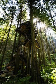 Swirl Tree House