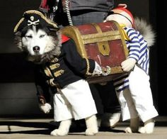 One of the coolest costumes I've ever seen for a dog or just in general