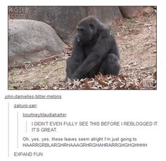 LOL! This just is too funny...he was feeling the leaves and I guess  they felt nice and he just went away like gorilla tornado...a gornado...LOL