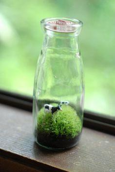 moss terrarium tiny cows in vintage pint milk jar