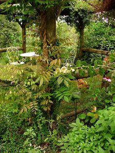 beautiful wild garden