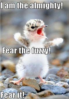 I fears it!
