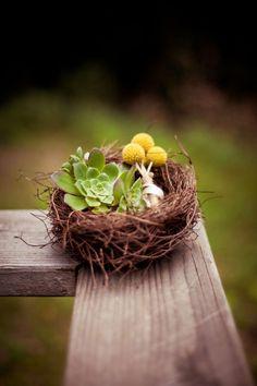 Succulents in Bird Next