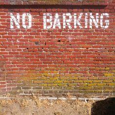 'No barking'  Do dog read?