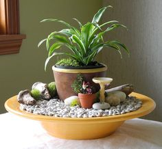 Fast & Easy Indoor Miniature Garden Ideas for the Black Thumb :: Hometalk
