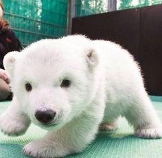 Wild Bear Snooping !