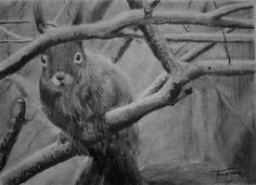 (SOLD) #55 Red Squirrel