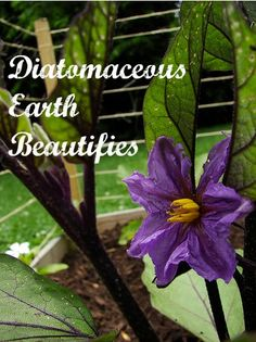 I would have to classify myself as obsessed with diatomaceous earth. Improves skin, hair, nails, and bones, plus detoxifies!