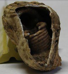 Brachiopod Feeding Tubes