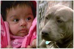 Hero Pit Bull saves baby from kidnapping, family says