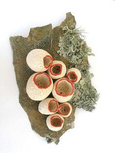 lichen fungi