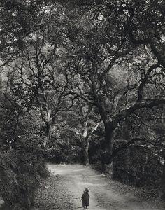 Wynn Bullock - Child on Forest Road, 1958